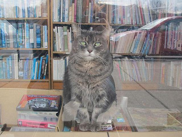 Пять книжных магазинов, в которых вы хотели бы провести ночь