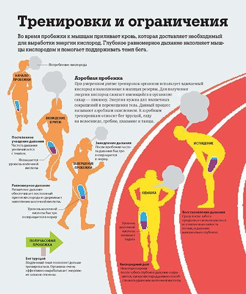фрагмент из книги Как работает тело