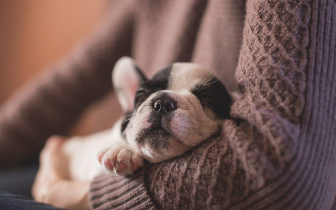 Качественный сон — секретный ингредиент счастливой жизни