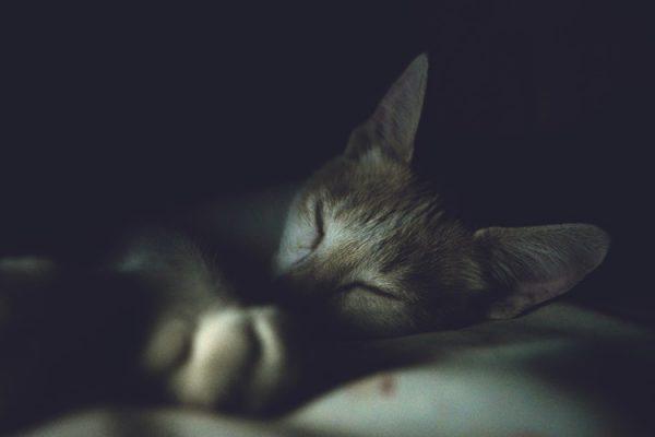 книга здоровый сон