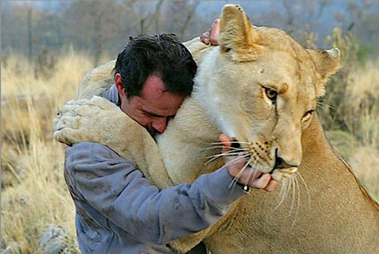 Lion-whisperer-Kevin-Richardson-Globovision-CC-flickr