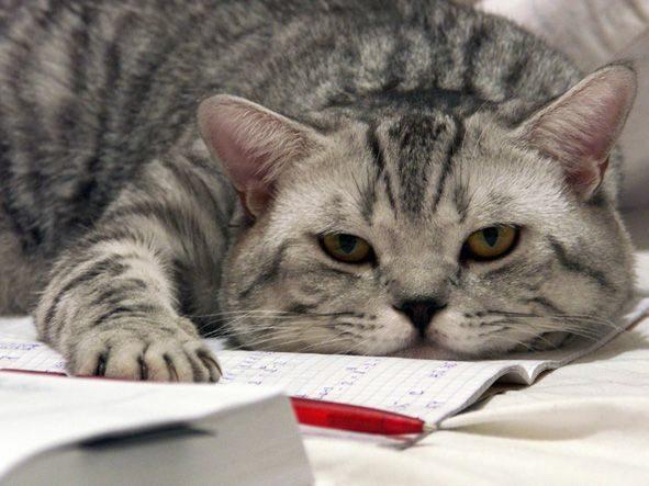 Как писать, чтобы хотелось читать тексты: 14 уроков Николая Кононова