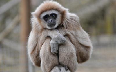 Кто такая внутренняя обезьяна, и как ее заставить замолчать